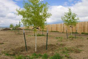Montana Landscape Construction - tree planting