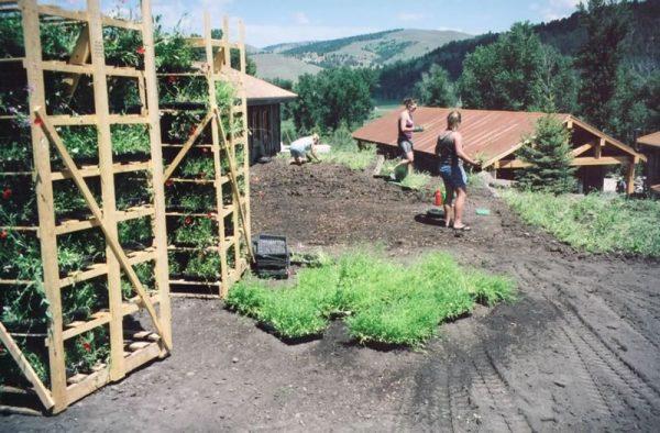 Southwest Montana Landscape Planning - planting